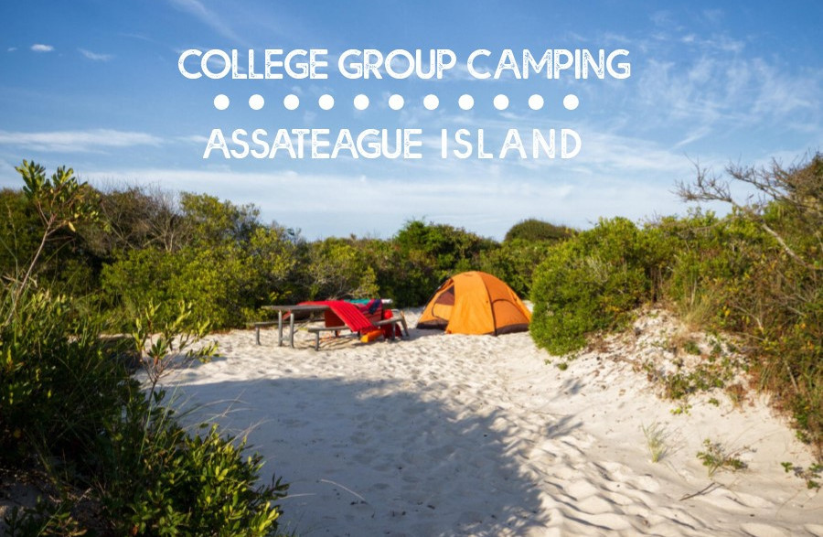 College Group Camping - Assateague Island